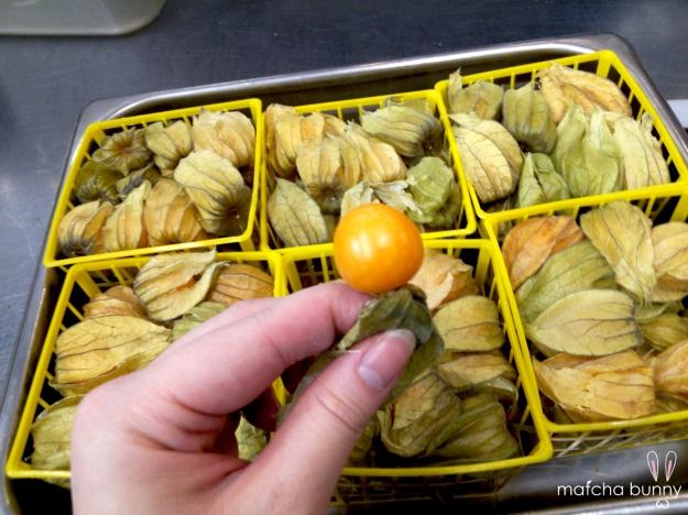 (Peeling? Shucking?) Fresh Gooseberries!